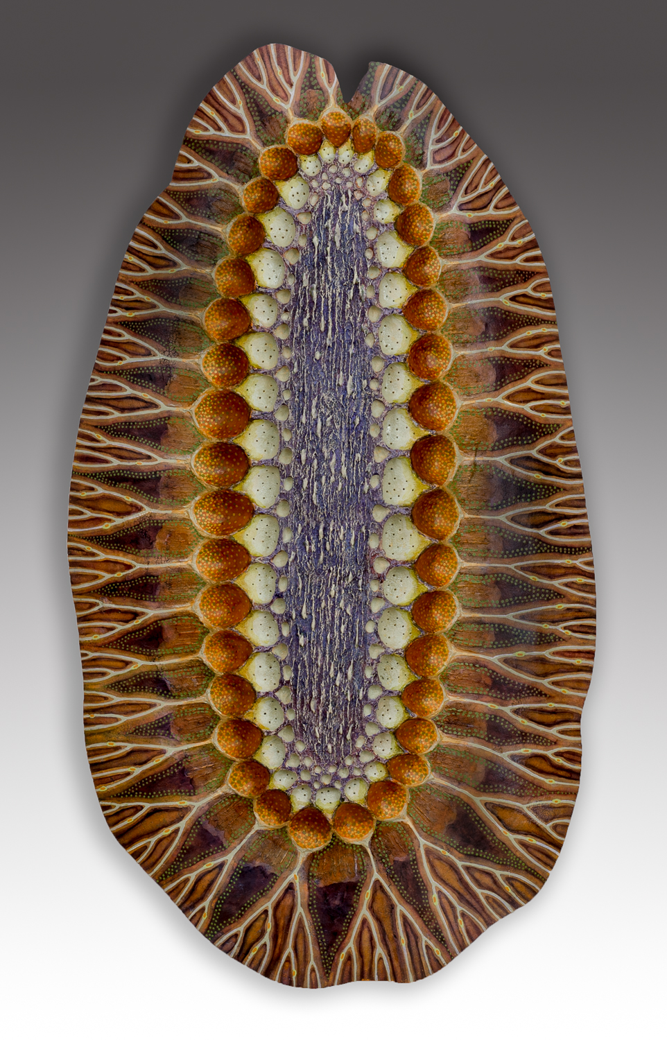 Diatom 3, 15 x 8.5 x 3 inches, sold