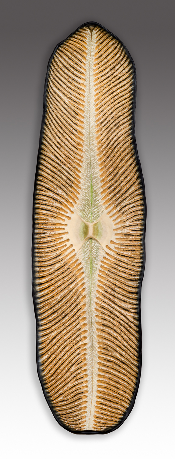 Diatom 2, 27.25 x 7.75 x 5.5 inches, sold